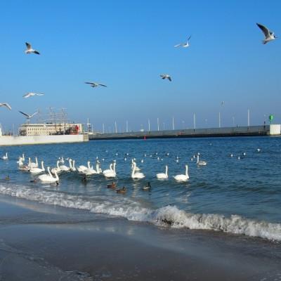Nad morzem ptaki koczowały na okruszki