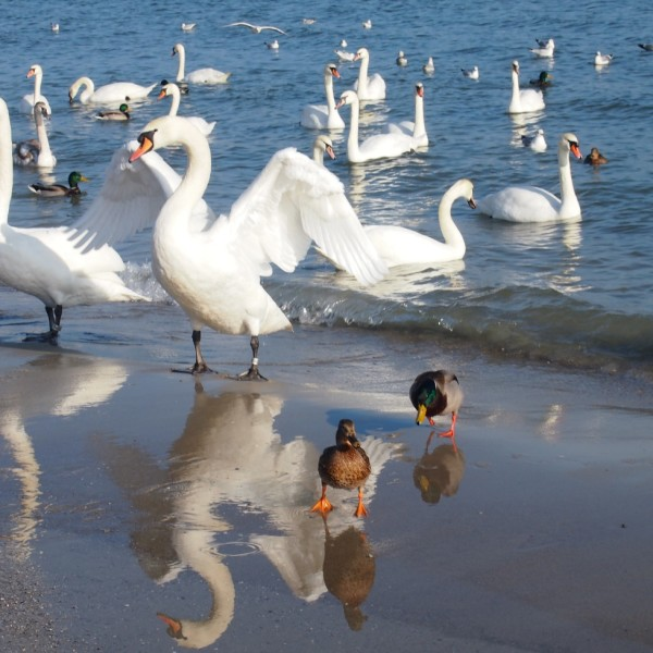 Ptaki polowały na okruszki