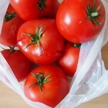 Włoska pomidorówka z Jadłonomii