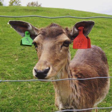 Kosewo PAN z dzieckiem – z wizytą u jeleniowatych